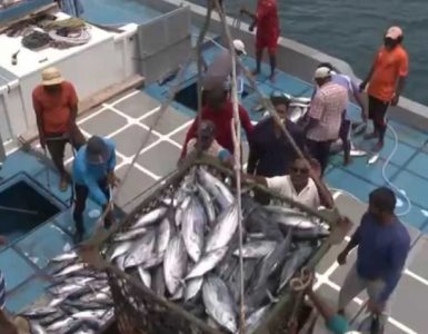 Vanuatu-caught tuna should be processed at Sino-Van Fish Processing Plant: Matai Seremaiah