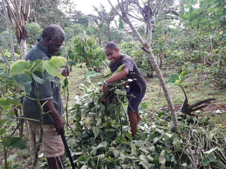 Sanma farmers access cuttings of noble variety of Kava through Kava Restocking Programme