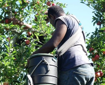 Reintegration Framework for Agriculture Workers in Labour Mobility Schemes